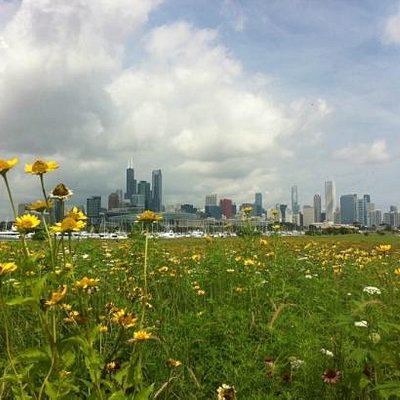 Summer at Northerly Island