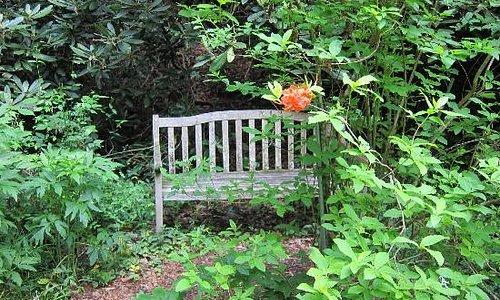 Flaming azalea with inviting bench