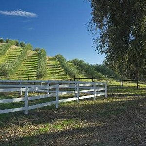 Pasolivo Olive Orchard