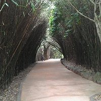 The Bamboo Arch