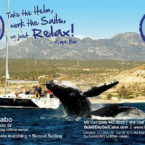 Day Sail Cabo advertisement