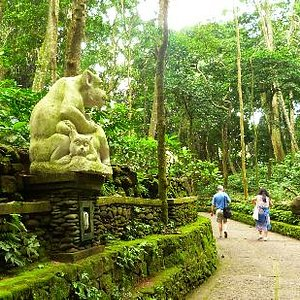 Monkey forest3