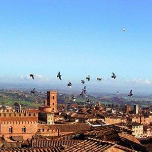 The best of Tuscany: Siena, Florence, San Gimignano
