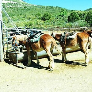 New and Young horses to ride, all sizes.