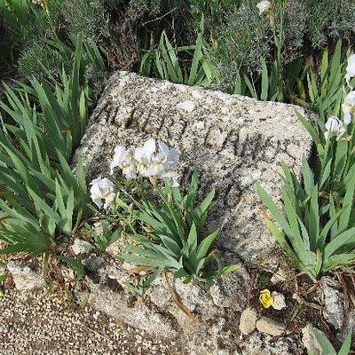 カミュの墓