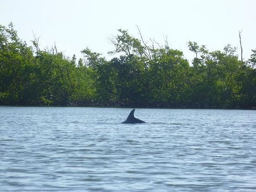 One of the many dolphins we saw. It was tough to get a good picture.