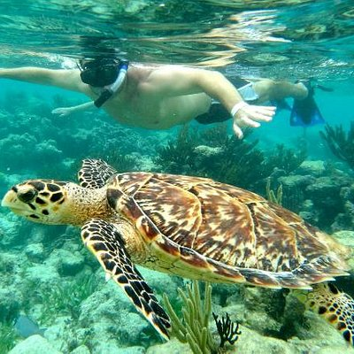Swimming with the Sea Turtles