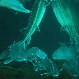 Blick in das Tunnel-Aquarium