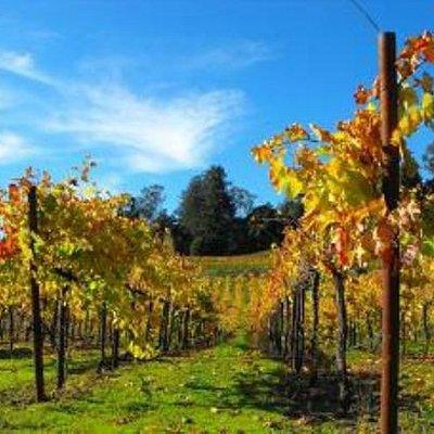 vines picture