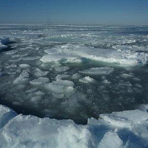 海岸まで来た流氷