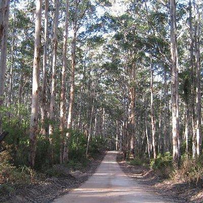 Bush tracks through Boranup Forest
