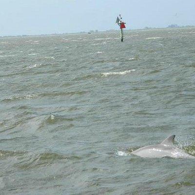 dolphin swim :)