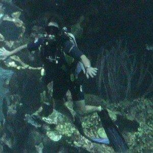 Diving at Disney 2012