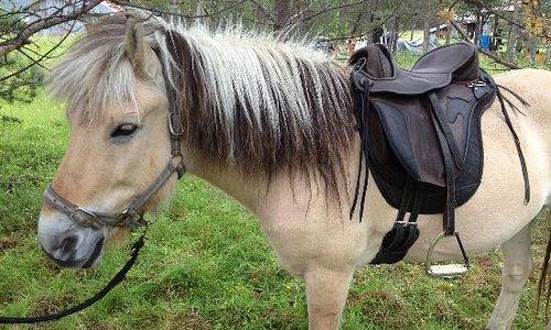 Good saddles!