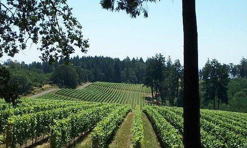 Vista Hills vineyards