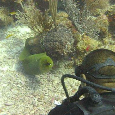 Simeon (DM) and Green Moray Eel