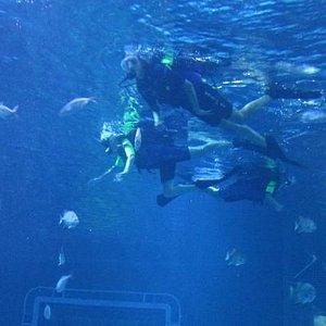 Epcot Seas Aqua Tour