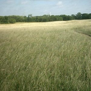 meadow, Oak Point Park, Plano, Texas.