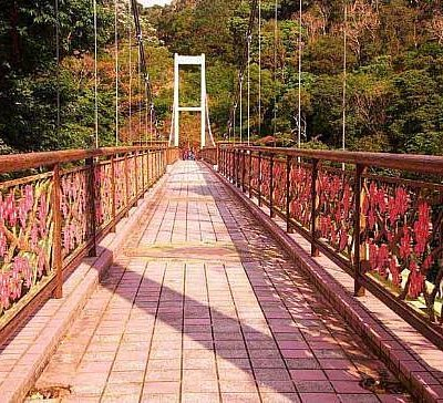 Cherry Blossom Bridge at the Top of Hill