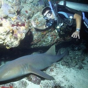 Diving in the Marine National Park