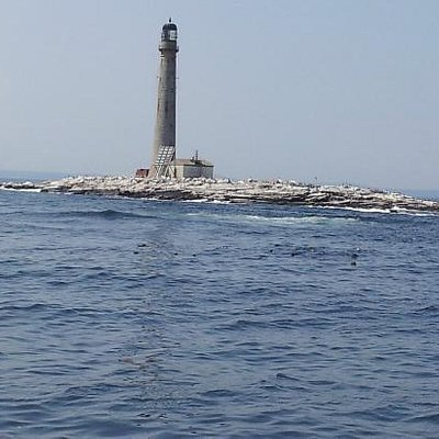 A lighthouse we passed with seals in the water.