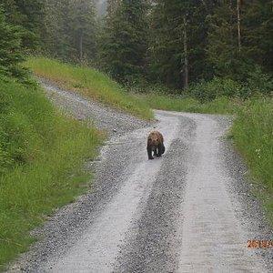 Bear approaching