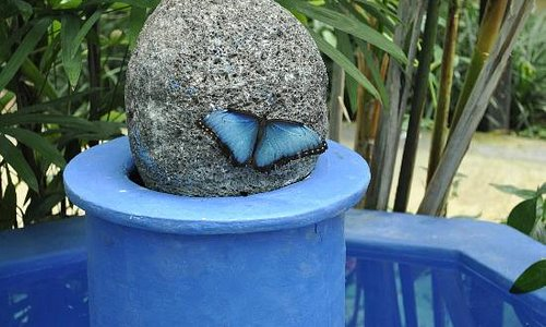 Morpho butterfly on top of a fountain