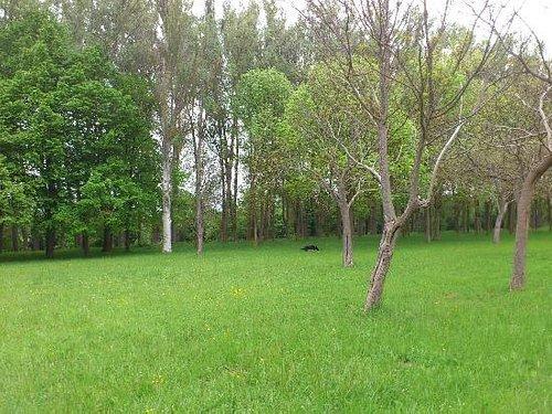 Green Ring parallel to Zadorra River - Anillo verde paralelo al río Zadorra