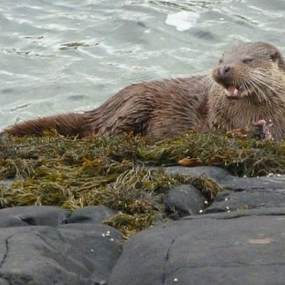 The most popular Otter Detective Walk