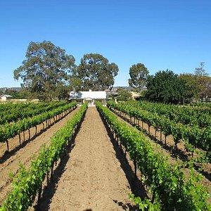 Swan Valley Organic Vineyard and Winery - Memorial Avenue