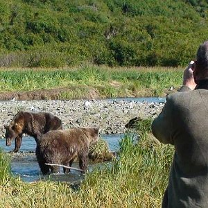 August Bear Viewing at Geographic Harbor, Katmai