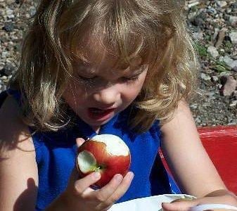 Apple Picking & Sampling