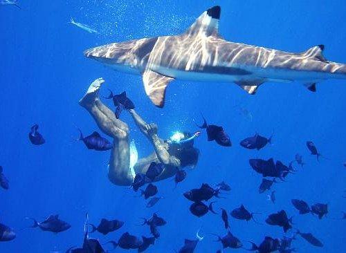Shark-watching