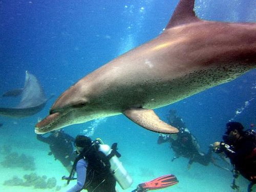 Dolphins with our divers :-)  Scuba Hurghada