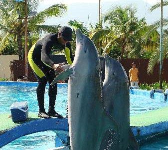 El Entrenador de los Delfines