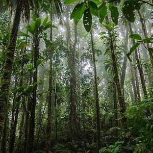 Des Cartiers Trail _ Lush Forest