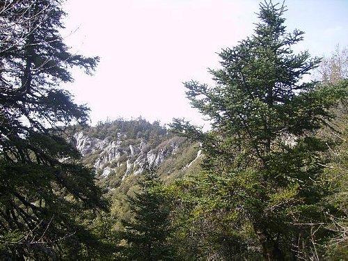 fir trees of Talassemtane