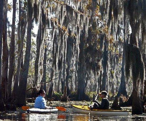 Kayak New Orleans Wetlands