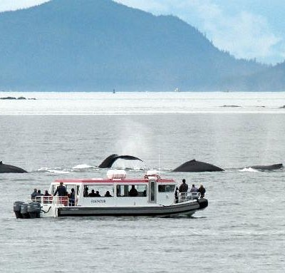 Surfacing whales by safari vessel