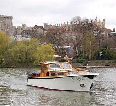 Larus in Windsor