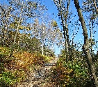 Hiking through Big Pocono State Park.