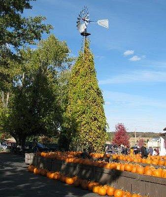 Pumpkin picking at Edwards