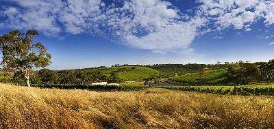 Longview Vineyards Estate Panoramic