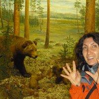 Attenti all'orso!