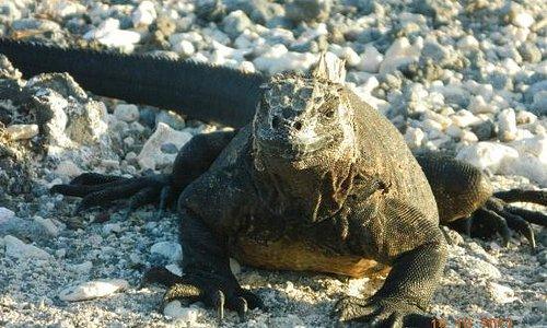 encuentro cercano con una iguana