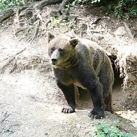 l'orso Cleo