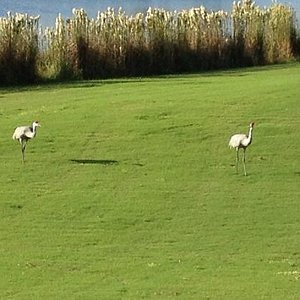 The Birds of Harmony