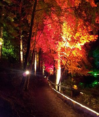 The changing colours of the trees (Enchanted Forest Oct 2012)