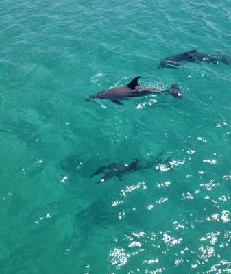 dolphin you see on the freespirit cruise