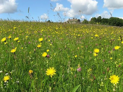 Colourful hay meadows are a big feature of the North Pennines